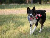 dog with usa flag bandanna poster