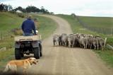 sheep farming poster