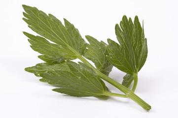 aromatic kitchen. fresh loveage leaf
