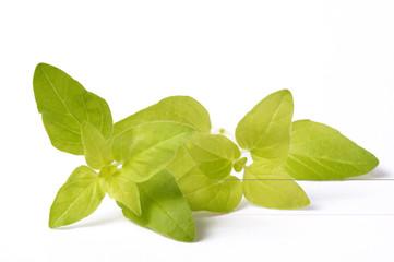 fresh and aromatic oregano