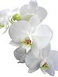 Leinwandbild Motiv orchide