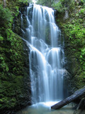 berry creek falls poster