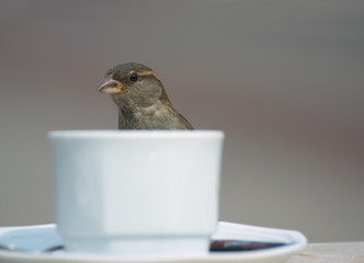 bird and coffee