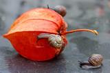 strolling snails poster