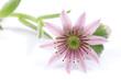 cactus. flower