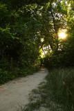 summer evening path poster