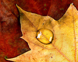 autumn droplet