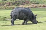rhinocerous,rhino,wild,mammal,animal,natu poster