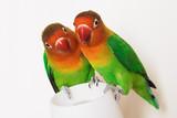 pair of lovebirds poster