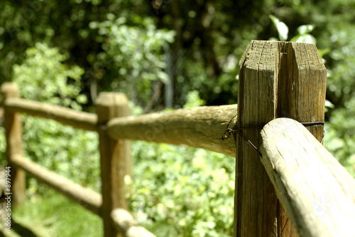fence in nature