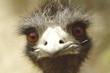 birds face