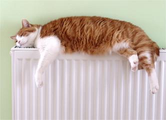 katze schläft auf der heizung