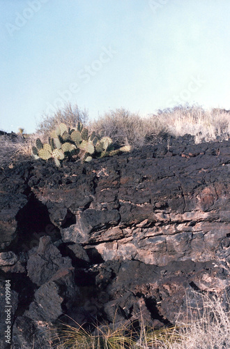 cactus and basalt