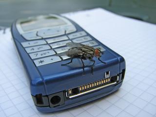 neugierige fliege