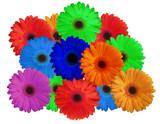 flowers of live - couleurs de vie poster