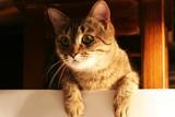 cat 7 poster