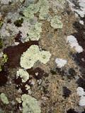 lichen sur granit poster