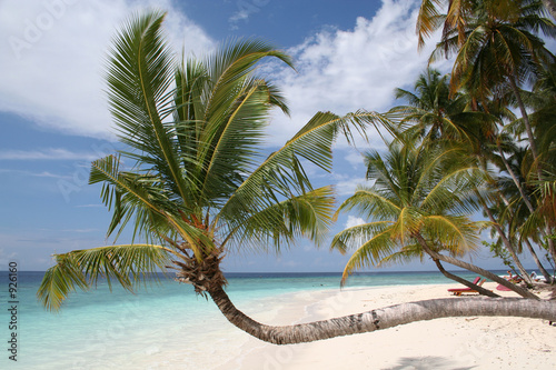 palm tree on beach, maldives