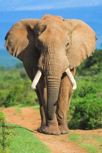 Aluminium Olifant elephant portrait