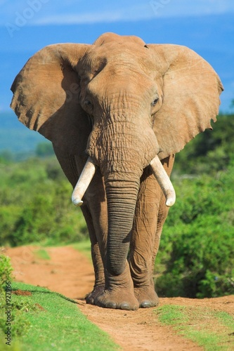 Foto op Plexiglas Olifant elephant portrait