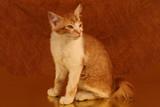 the bug,cat,feline,orange tabby,orange,tabby,cute, poster
