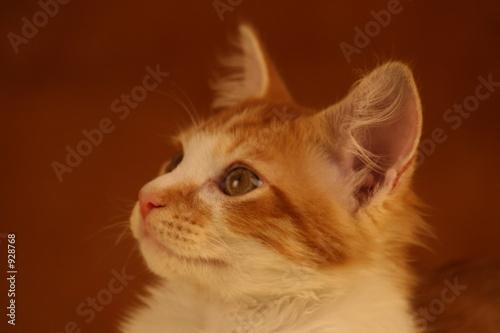 the bug,cat,feline,orange tabby,orange,tabby,cute, t-shirt
