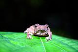frog on a green leaf poster