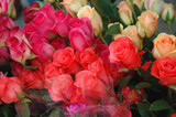 rose bunches poster