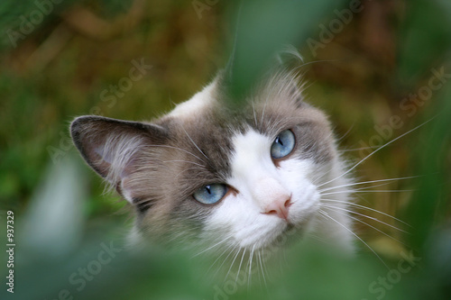 chat au doux regard