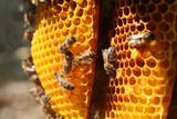 Fototapeta rayons de miel