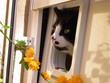 die katze und das frühlingserwachen