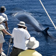 baleine et tourisme