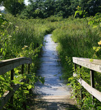 wetlands boardwalk poster