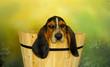 roleta: basset hound