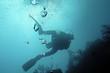 plongeur des caraibes