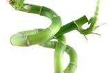 lucky bamboo spiraling stems poster