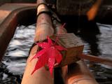 autumn japanese still life poster