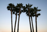 palm trees top poster
