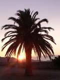 palmier sur couché de soleil 1 poster