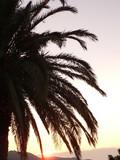 palmier sur couché de soleil 2 poster