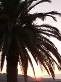 palmier sur couché de soleil 3 poster