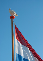 seagull and flag