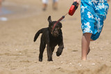 boy running with puppy poster