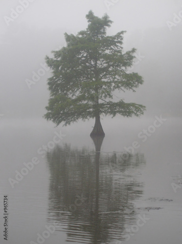 drzewo-cyprysowe-w-stawie-pulapkowym-delaware