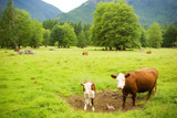 cows in a pasture poster