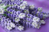 lavender - 974395