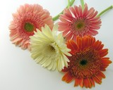 bunch of colorful flowers poster