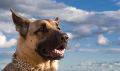 the dog interest-4