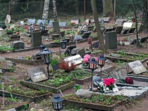 animal cemetery - 982997