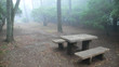mist in japanese park